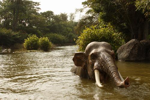 Disneyland Resort HongKong - Elefant in adventure land